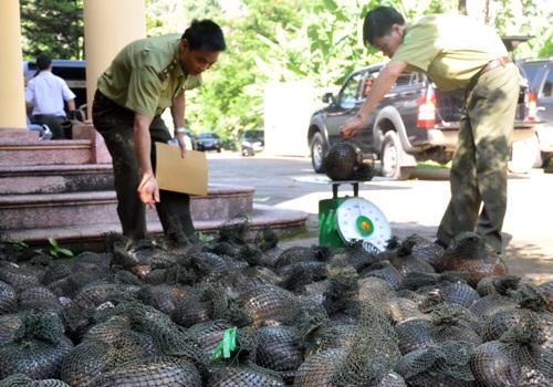 Lực lượng chức năng thu giữ tang vật vi phạm buôn bán động vật hoang dã. Ảnh: TNMT.