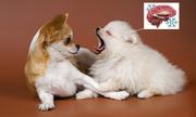 Lý do động vật cũng ngáp ngủ như con người