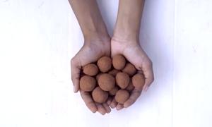 Nông dân Ấn Độ gieo hạt bằng 'bom hạt giống'