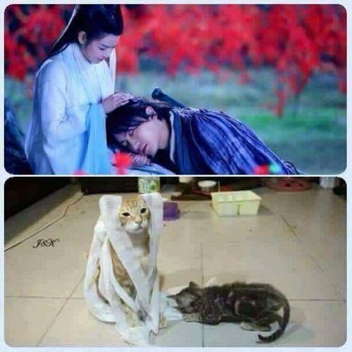 Cô Long và Dương Quá phiên bản mèo.