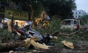 5 người bị thương khi cây đổ trên phố Hà Nội