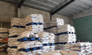 Gần 100 tấn đường nhập lậu bị thu giữ ở Quảng Nam