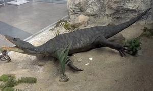 Dấu vết bệnh lao ở hóa thạch bò sát 245 triệu năm