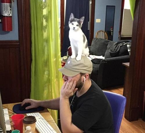 Loài mèo đang chuẩn bị thống lĩnh thế giới.