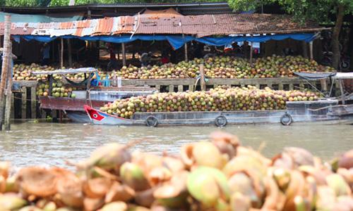 Hiệp hội Dừa nhận định rớt giá là do quy luật thị trường. Ảnh: Hoàng Nam
