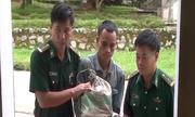 Vác bao tải 48.000 viên ma tuý đưa vào Việt Nam