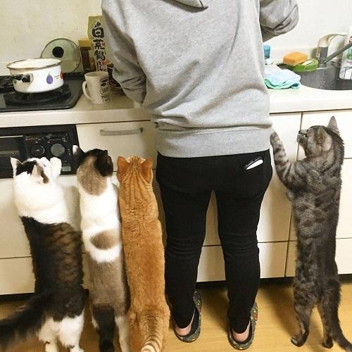 Muốn ăn phải lăn vào bếp.