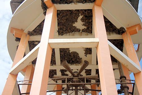 Hàng trăm tổ chim én dưới đáy bồn chứa nước của di tích. Ảnh: Nguyễn Khoa