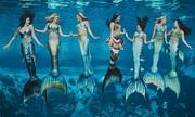 Bí quyết nhịn thở của những nàng tiên cá ở Mỹ