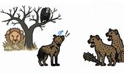 Linh cẩu đực chật vật sinh tồn dưới sự chèn ép của con cái