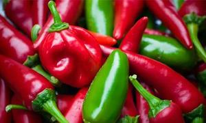 Chuột liệu có biết cay khi ăn ớt?