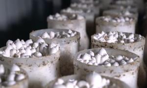Kỹ sư cơ khí tự nghiên cứu, chế tạo dây chuyền trồng nấm