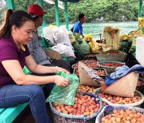 Câu lạc bộ tỉnh nguyện trái tim Việt, Hải Phòng ra xã Việt Hải là xã đảo của huyện đảo Cát Hải thu mua vải giúp người dân. Ảnh: CTV