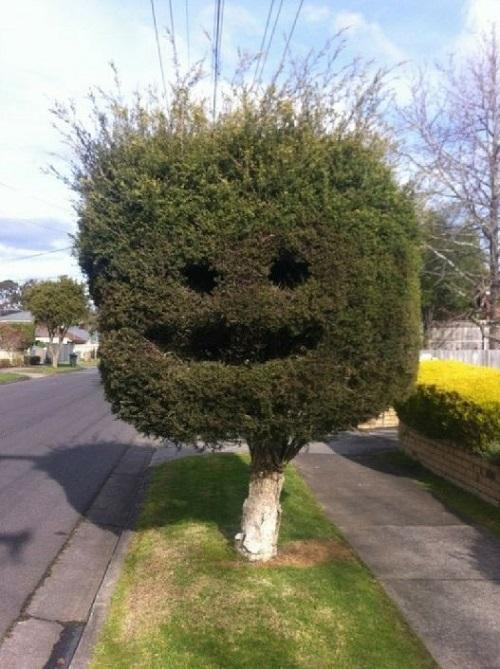 Nghệ thuật tỉa cây.