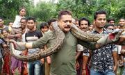 Kiểm lâm Ấn Độ suýt chết vì đùa với trăn