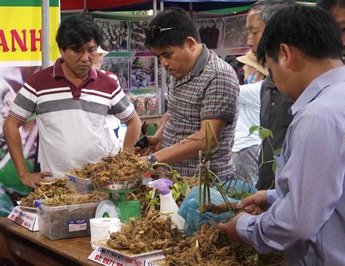 Sâm Ngọc Linh được bày bán tại phiên chợ sâm Quảng Nam. Ảnh: QN.