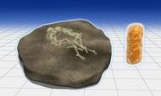 Vi khuẩn gây bệnh dịch hạch trên răng hài cốt 3.800 năm