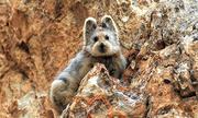 Thỏ ma thuật được phát hiện bằng camera hồng ngoại