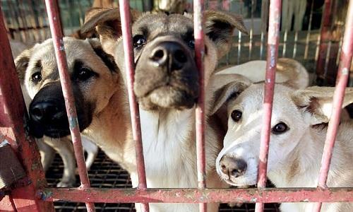 Chó nhốt trong lồng chờ bán ở một ngôi chợ Hàn Quốc. Ảnh: Reuters.