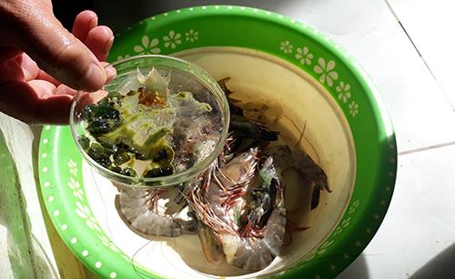 Những con tôm ở cơ sở kinh doanh hải sản Tình Luyến bị bơm tạp chất lạ màu xanh. Ảnh: Lam Sơn.