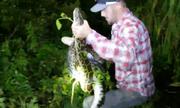 Cá sấu được giải thoát khỏi vòng siết tử thần của trăn