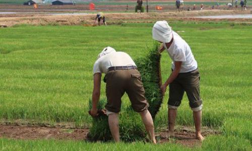 Nông dân Triều Tiên dùng khay nhựa để trồng lúa theo phương pháp của Ủy ban Dịch vụ Bạn bè Mỹ. Ảnh: AFSC.