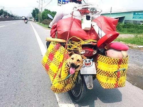 Người vận chuyển phiên bản Việt.