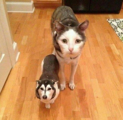 Mèo chó - chó mèo.
