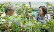Kinh nghiệm trồng rau hữu cơ của người dân Thanh Đông