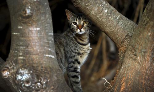 Mèo hoang Ảnh: Reuters.