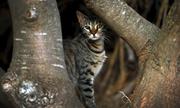 Loài mèo tàn sát một triệu bò sát mỗi ngày ở Australia