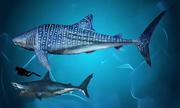 Những loài cá nắm giữ kỷ lục trong tự nhiên