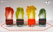 Tại sao lá cải thảo đổi màu?