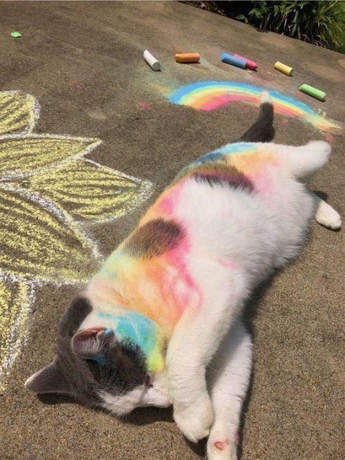 Mèo tùm lum thể.