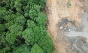 Diện tích cây nhiệt đới bị chặt phá năm 2017 gây lo ngại