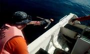 Cô gái định bơi từ Philippines về Trung Quốc được giải cứu
