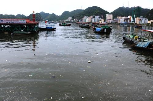 Vịnh Cát Bà đang bị ô nhiễm bởi nước thải và đủ các loại rác thải được xả xuống mỗi ngày. Ảnh: Giang Chinh