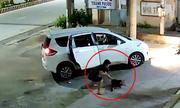 Cẩu tặc đi ôtô bắt trộm chó ở Tây Ninh