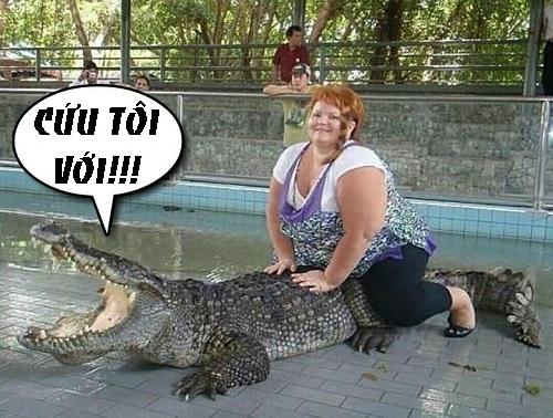 Cá sấu và người đẹp ngàn cân.