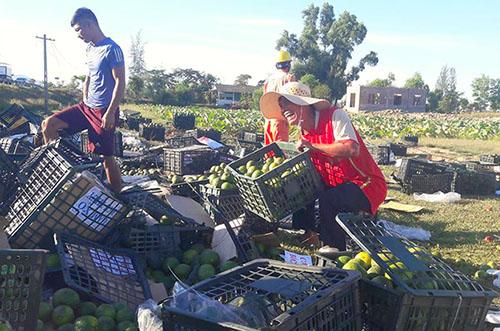 Người dân vui vẻ ra giúp tài xế gom hoa quả bị đổ xếp lại một chỗ. Ảnh: Đ.H