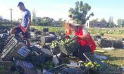 Người dân đội nắng gom hơn 20 tấn hoa quả giúp tài xế bị lật xe