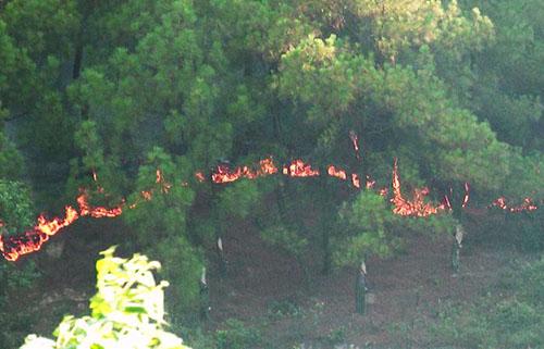 Hiện trường vụ cháy rừng. Ảnh: Ngọc Thanh