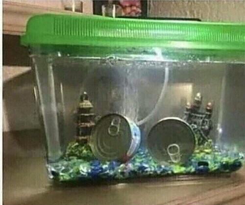 Thú vui nuôi cá hộp.