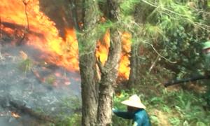 Bốn vụ cháy rừng xảy ra liên tục trong ba ngày tại Nghệ An