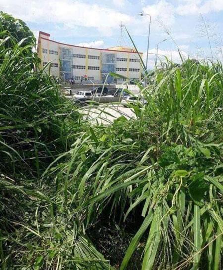 Vị trí từ lùm cỏ nhìn ra nơi ông Halili bị ám sát. Ảnh: GMA News.