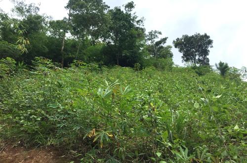 Khu rừng nơi gia đình mai táng anh A Xía. Ảnh: Sơn Nguyễn.