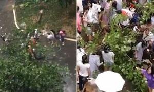 Thầy giáo bị cây đè, hàng chục nữ sinh đội mưa ứng cứu