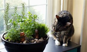 10 loại rau, củ dễ trồng tại nhà