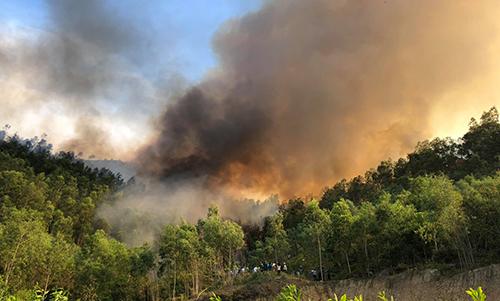 Hàng chục ha rừng thông, keo ở Hậu Lộc (Thanh Hoá) đã bị thiêu rụi. Ảnh: Lam Sơn.