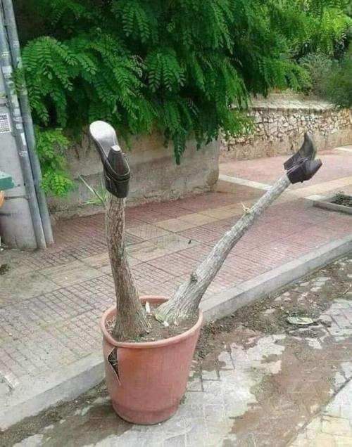 Tài chăm cây không có nhưng óc hài hước có thừa.